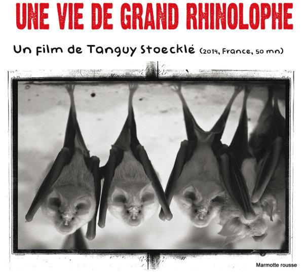 Visuel du film: «Une vie de Grand Rhinodolphe», réalisé par Tanguy Stoecklé représentant des chauves-souris.