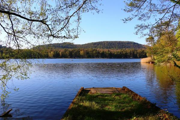 Vue de l'étang de Hanau, Réserve naturelle des tourbières du Pays de Bitche.