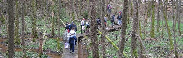 Groupe suivant l'itinéraire de découverte de la forêt.