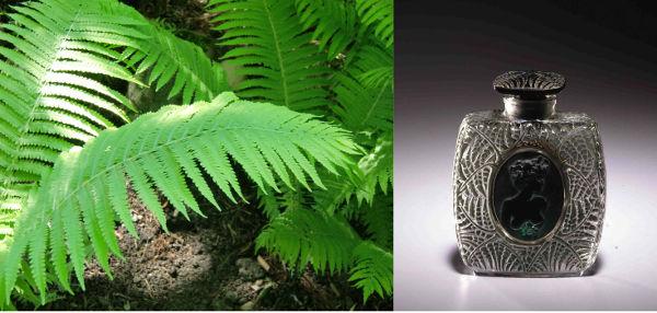 A gauche photo de nature, à droite un flacon de parfum Lalique