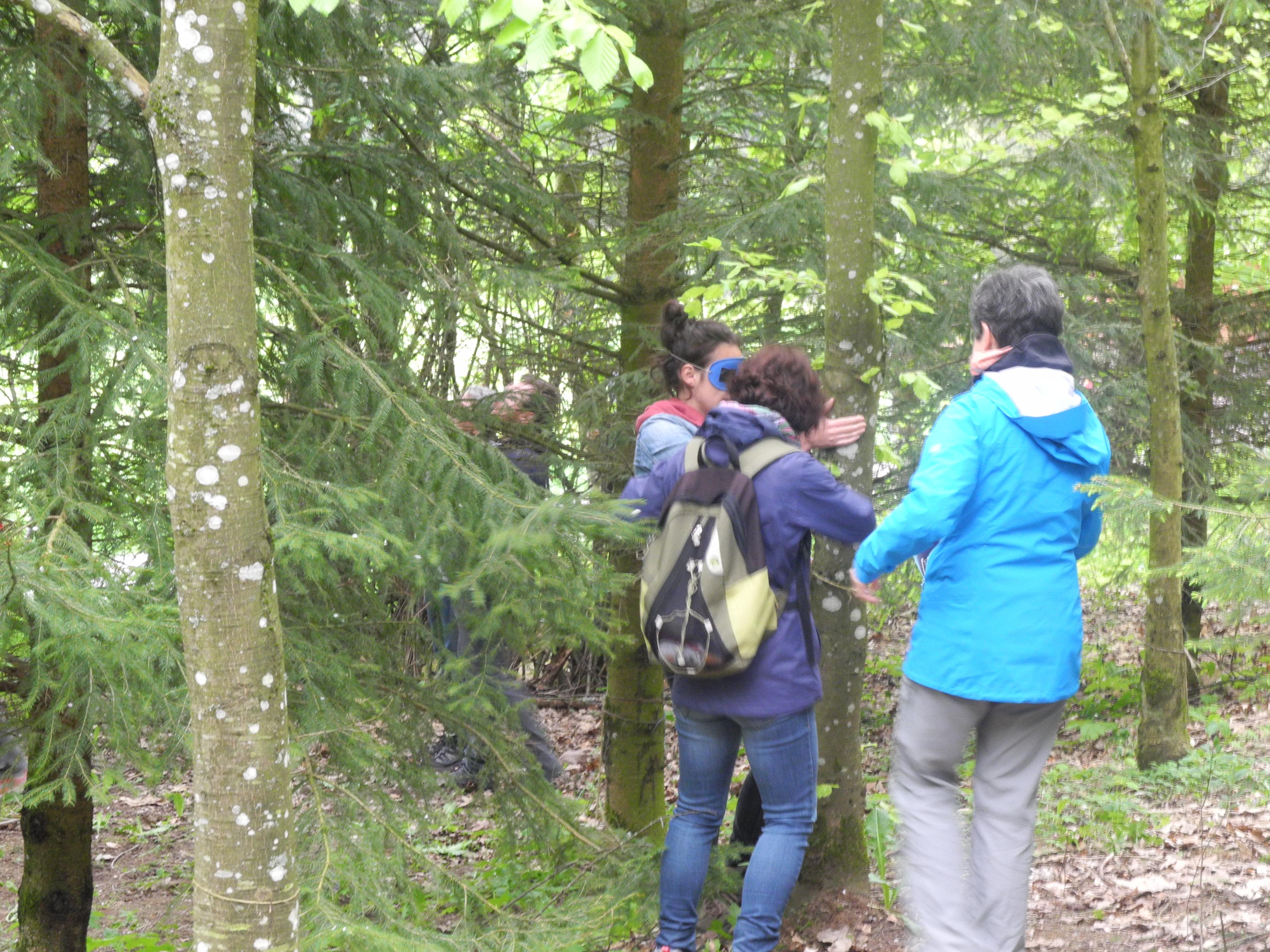 Balade sensorielle en forêt à Lohr